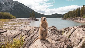 Kanadisches Erdhörnchen von Dimitri Louwet