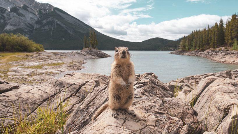 Canadese grondeekhoorn van Dimitri Louwet