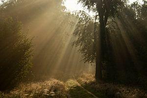 Zonnestralen op het bospad