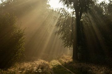 Zonnestralen op het bospad van Jannie Looge
