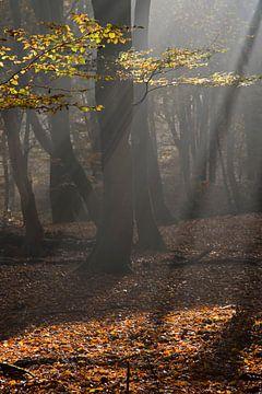 Zonneharp in de herfst van Barbara Brolsma