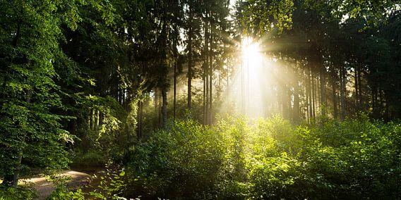 Sunrise in the forest van Günter Albers