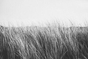 Zwart wit foto van duingras in de duinen bij Katwijk aan Zee | Strand fotografie in Nederland van Evelien Lodewijks