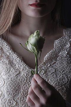Rose sur Arnold van Rooij