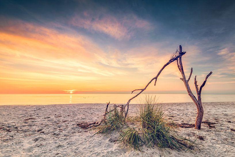 Still life in the west beach (Prerow / Baltic Sea) van Dirk Wiemer