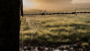 Spinnenweb bij zonsopgang van Tim Briers
