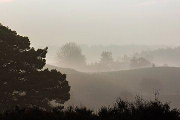 naaldboom in de mist van Tania Perneel