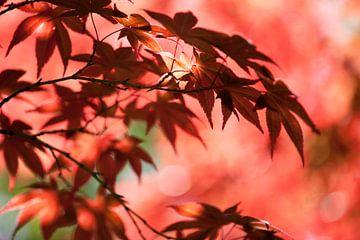 Japanese garden 7 sur Raoul Suermondt