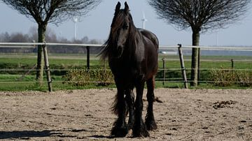 In de paardenbak von Raymond Meerbeek