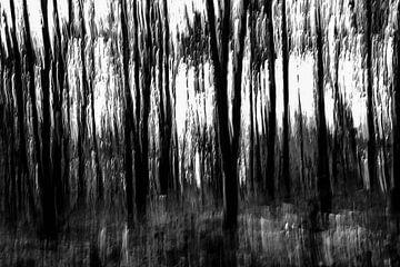 dunkler Wald von Peter van der Mast