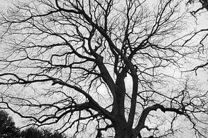 Zwart-witte boom van Anita van Hengel