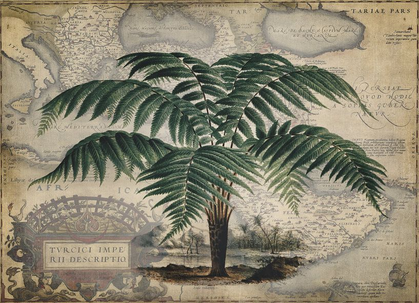 Baumfarn Dicksonia Chrysotricha von Andrea Haase