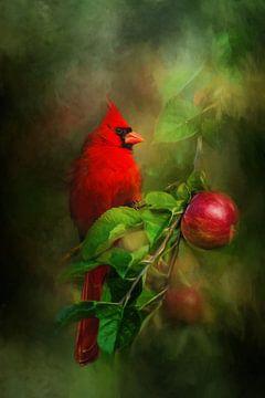 Roter Kardinal im Zweig von Diana van Tankeren