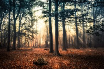 Herfst in aantocht von Niels Barto