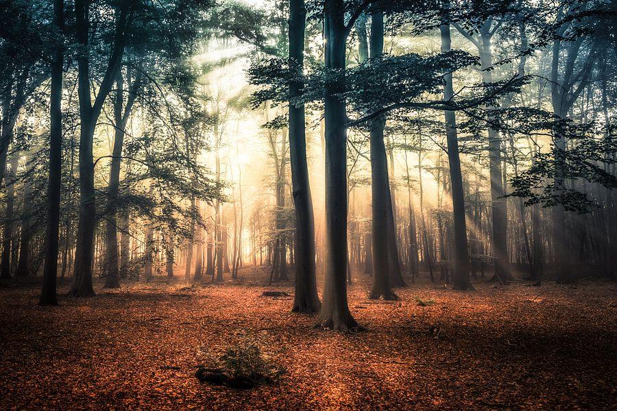 Herfst in aantocht van Niels Barto