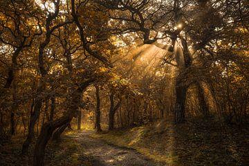 Zonnestralen in het herfstbos van Peter Korevaar