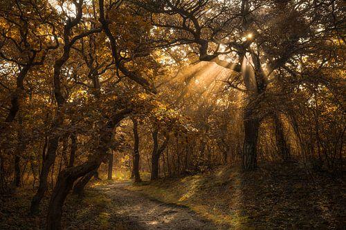 Zonnestralen in het herfstbos van