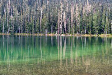 See mit schöner grüner Reflexion im Wasser von Diana de Boer