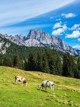 Gezicht op de Litzlalm met koeien in Oostenrijk van Rico Ködder