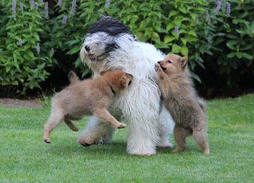 Playing dogs von Maja Smits