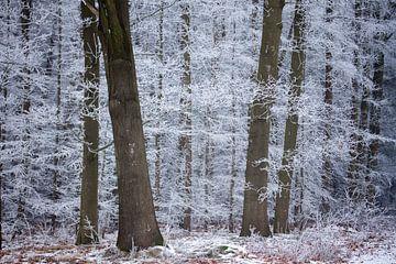 winterbomen, een bos in Drenthe van Karijn Seldam