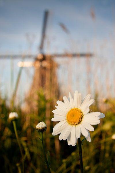 Margriet bij Kinderdijkse molen van Peter Halma