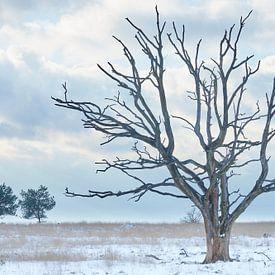 Toter Baum an einem kalten Wintertag von Cor de Hamer