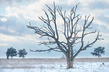 Dode boom op een koude winterdag