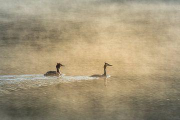 Zwei Lappentaucher im Nebel bei Sonnenaufgang von John van de Gazelle