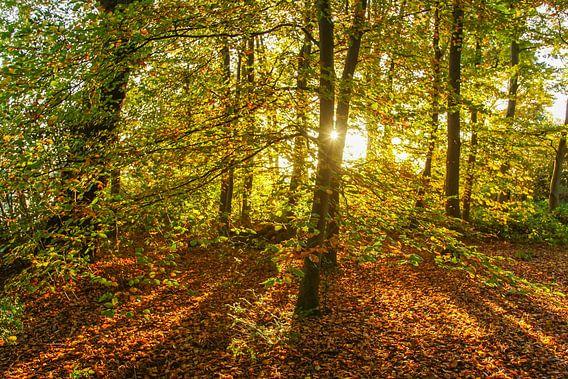 bos met doorschijnende zon