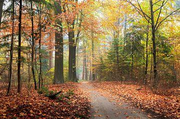 Snoepkleuren bos van Corinne Welp