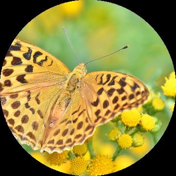 Vlinders van Carla Eekels