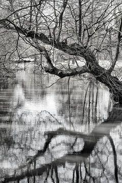 Reflectie sur Pieter van Roijen