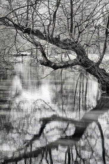Reflectie van Pieter van Roijen