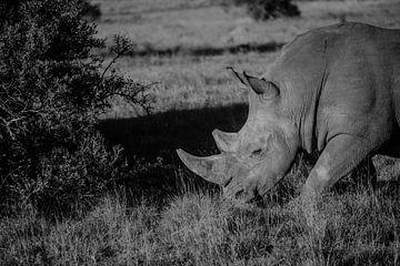 Das Nashorn in der südafrikanischen Savanne von Floor Bogaerts