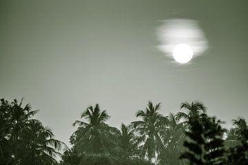 Monochrom Jungle sun van MR OPPX