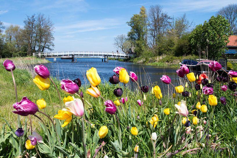 Tulpen in de wind van Freek Rooze
