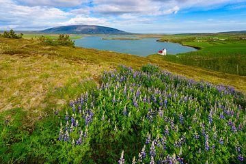 Þingvallavatn See von Denis Feiner