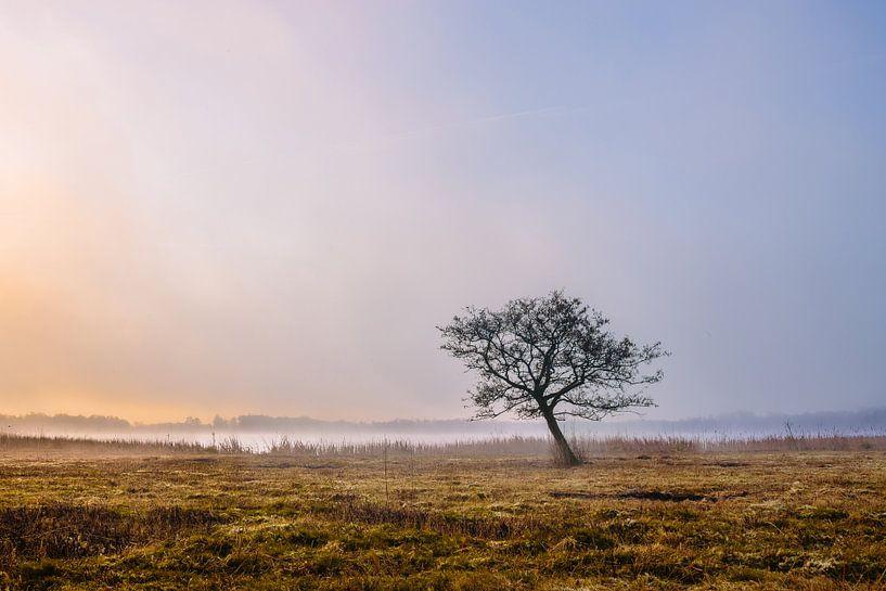 Karakteristieke boom aan de waterkant van Wilko Visscher