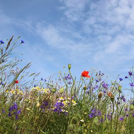 fleurs sauvages sur Ostsee Bilder