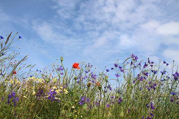 veldbloemen van Ostsee Bilder