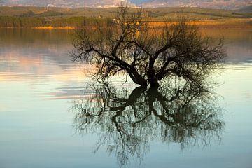 Tree Reflection von Cornelis (Cees) Cornelissen