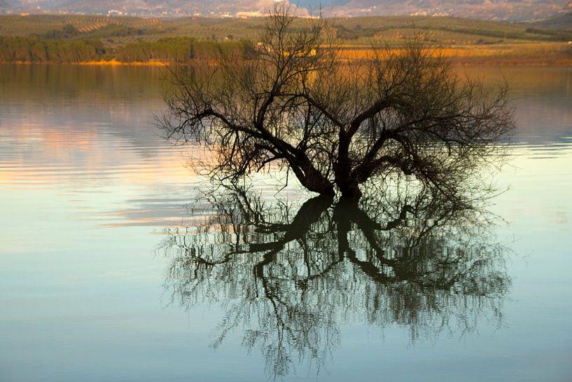 Tree Reflection van Cornelis (Cees) Cornelissen