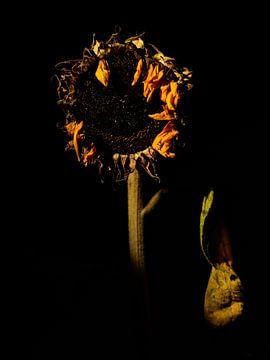 Sonnenblume von Ton Dopping