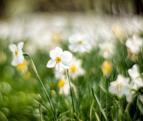 Stralens voorjaar