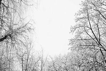 Winterwald von Andrea Fuchs