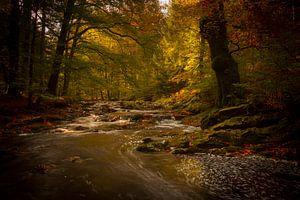 Autumn, Herfst spookjesbos  van
