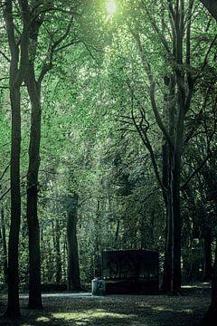Hoge bomen in de zomer op landgoed Visdonk (Roosendaal) van Fotografie Jeronimo