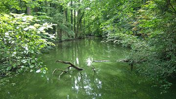 Teichsumpf umgeben von Bäumen und Büschen. Domain Kruikenburg, Ternat, Belgien von Deborah Blanc