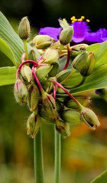 Sommerblume (mit Fliege) von Sran Vld Fotografie